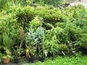 Zahradnictví, potřeby pro zahrádkáře, okrasné dřeviny, ovocné stromky, Poděbrady